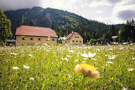 Blumenwiese in Ruhpolding in der Region Chiemsee