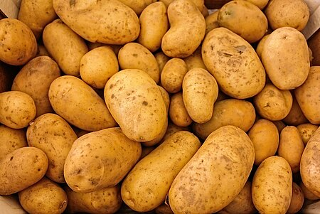 Kartoffellese in Kulmbach