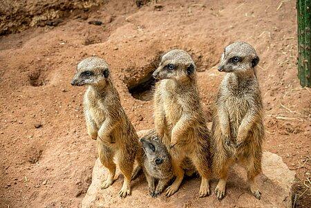 Augsburger Zoo