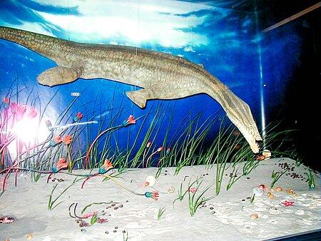 Ein Nothosaurier im Urweltmuseum Bayreuth