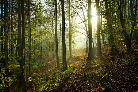 Natur in Bayreuth